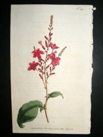 Curtis 1793 Hand Col Botanical Print. Rose Coloured Leadwort 230
